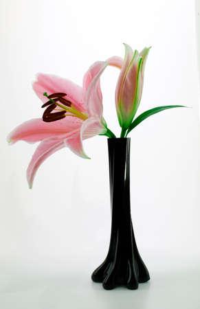 Pink Stargazer Lily In An Elegant Black Vase Stock Photo Picture