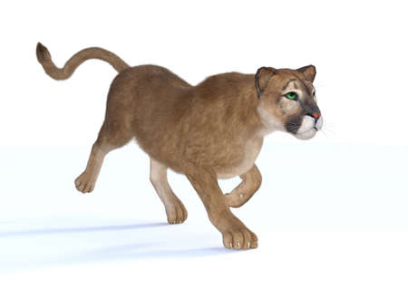 3d rendering  of a hunting puma isolated on white Stock Photo