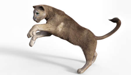 3d rendering  of a hunting puma isolated on white Banque d'images - 99821496