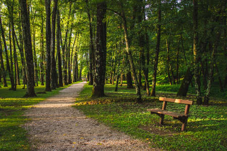 green forest with path and bench Banco de Imagens