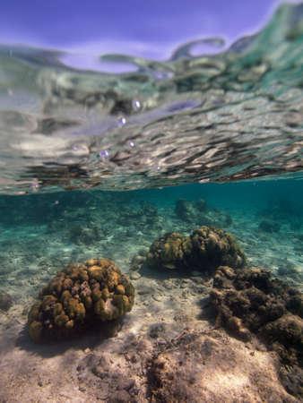 subaquatic: Under the sea Stock Photo