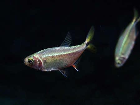 subaquatic: Fish Stock Photo