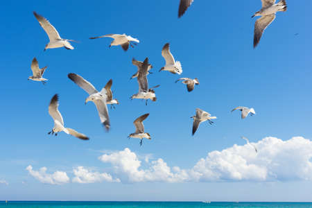 Seagulls flying over the sea