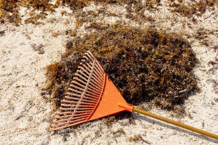 Sargassum on mexican beach Banco de Imagens