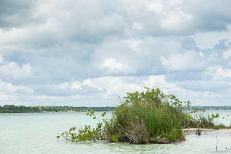 Mangrove trees in Bacalar lagoon Imagens