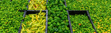 Mexican green chili peppers in market Stock Photo