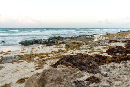 Sargassum algae problem in Playa del Carmen, Mexico.