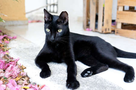 Beautiful black cat resting quietly at the garden