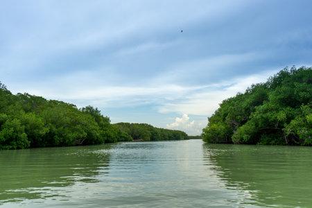 View of mangrove swamp in rio lagartos Yucatan