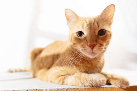 Lovely yellow cat looking at camera on white background Stock Photo