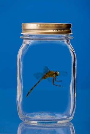 Insect trapped in a jar