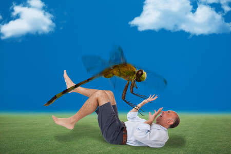 attacked: Man being attacked by a dragon fly