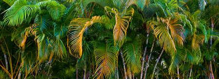 Panorama of colorful palm tree leaves 版權商用圖片