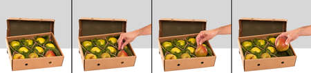 williams: Freshly picked Williams Bartlett pears in box