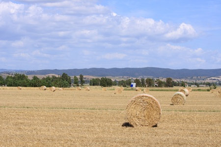 Maremma - Tuscan - Countryside with hay rollers photo