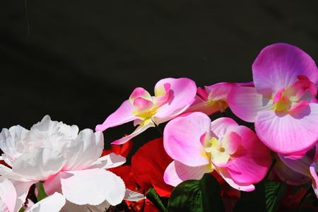 sensations: Gardening and flower decorations Stock Photo