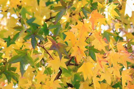 sensations: Autumn leaves
