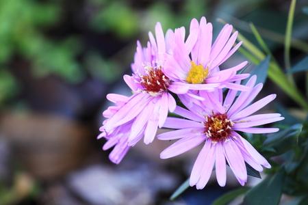 sensations: Pink flowers Stock Photo