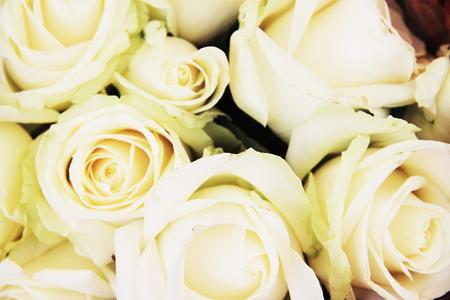sensations: White roses