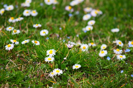 flowered: Flowered garden Stock Photo