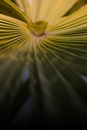 contrasts: Palm leaf