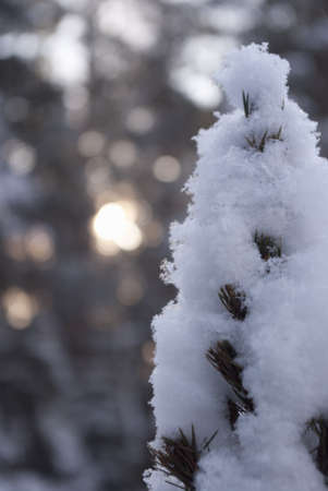 snowy tree in winter forest on blurry background with sunlights photo