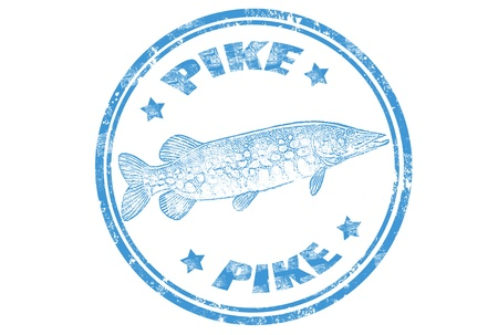 grunge rubber stamp of a pike fish and the word pike written inside,vector illustration Vector