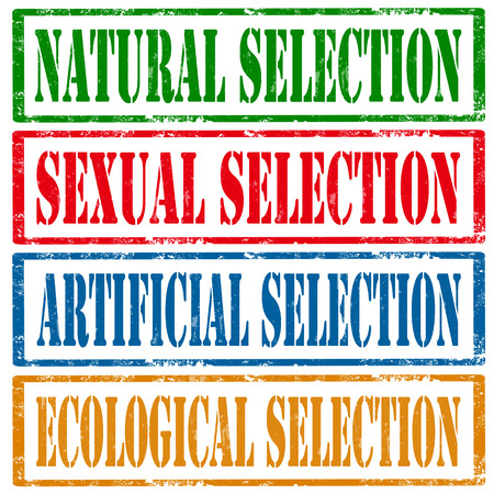 natural selection: Set of grunge rubber stamp with text Natural Selection,Sexual Selection,Artificial Selection and Ecological Selection,vector illustration Illustration