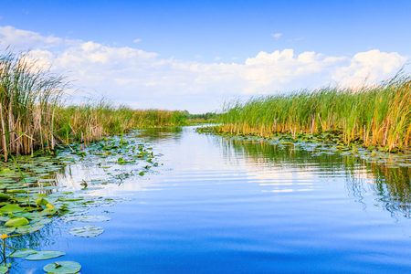 danubian: Danube Delta, Romania. Water channel in the Danube Delta with swamp vegetation. Stock Photo