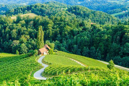 Famous Heart shaped wine road in Slovenia. Stockfoto