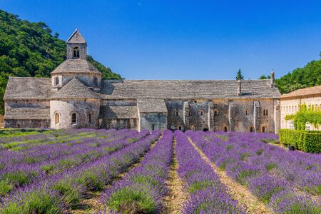 Provence, France. Blooming purple lavender fields at Senanque monastery. Stock fotó
