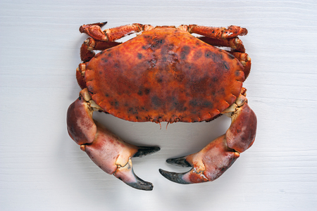 edible: Brown crab on white wooden background. View from above.