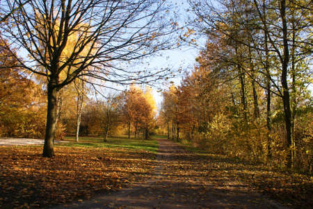 Autumn landscape in M ???? ¼nster