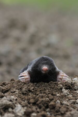 mole Stock Photo - 17504582