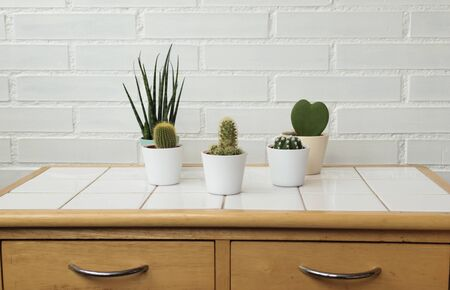 Modern kitchen or bathroom background. Cacti in pots on a table and a white brick wall 스톡 콘텐츠