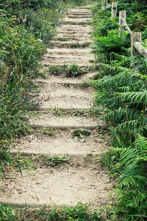 natural stairs in a path 스톡 콘텐츠