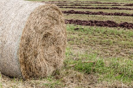 haystack after the harvest