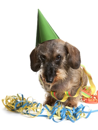 Adorable dachshund with a party hat and party streamers Stock Photo