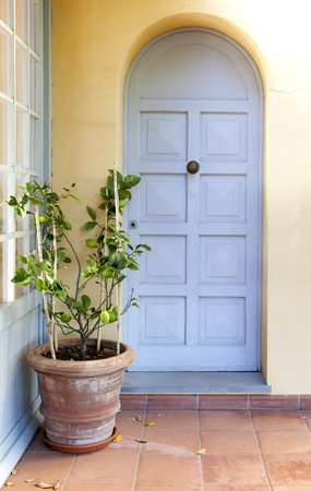 Small lemon tree in a patio with a pastel blue door