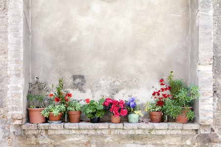 Row of flower pots on an ancient wall in Tuscany, Italy