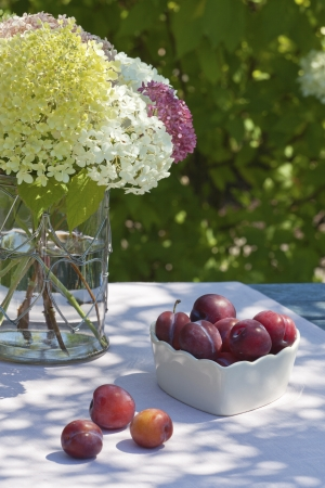 Plums on a table in the garden and a vase with hydrangeas