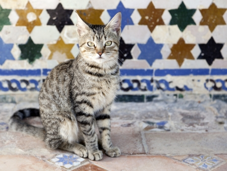 Cat sitting in front of an old tiled wall in Seville, Spain