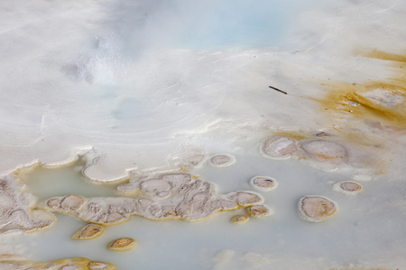 Bacterial mats at Porcelain Basin, Yellowstone National Park