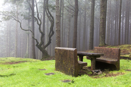 picknick: Picknick benches in misty Laurel Forest, Madeira, Portugal