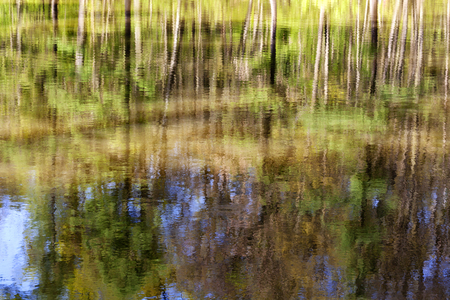 Abstract reflection of green trees in water