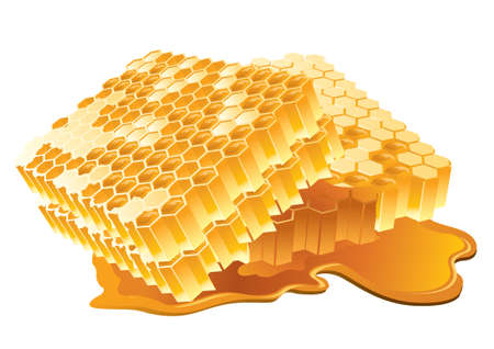 bumblebee: Vector illustration of honeycomb