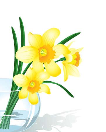 daffodils: Vector illustration narcissus in glass vase
