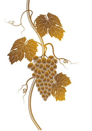 grapes on vine: Grapes silhouette Illustration