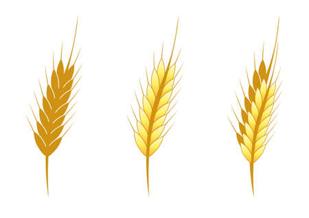 Vector illustration of a stylized head wheat