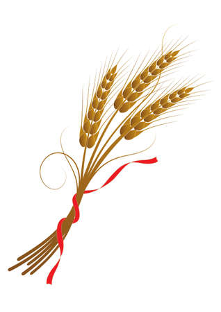 Vector illustration of wheat tied with a ribbon 일러스트